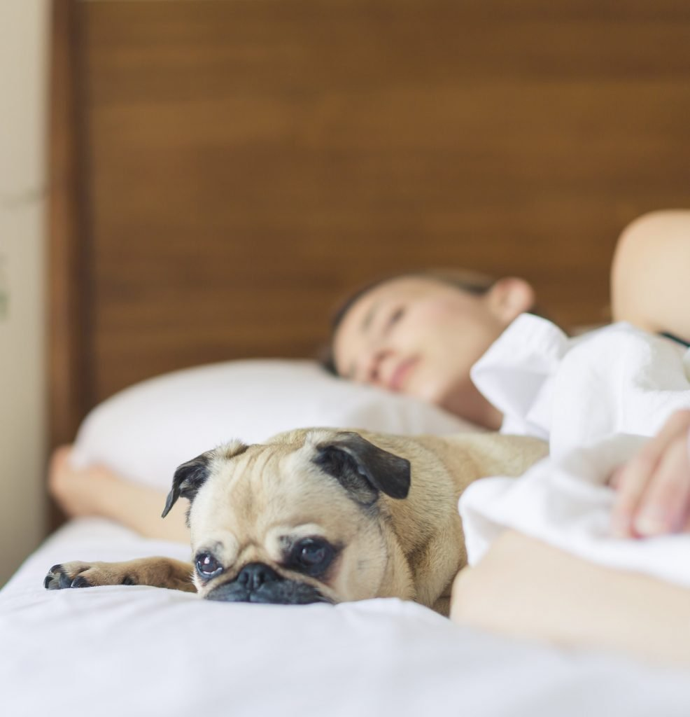 3 Night Weekend Stay Gift Voucher - Dog House Margate B&B