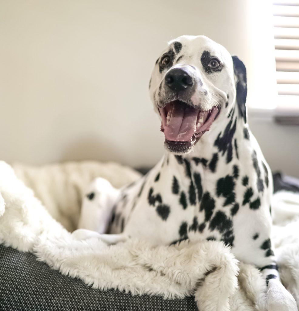 £50 Gift Voucher - Dog House Margate B&B